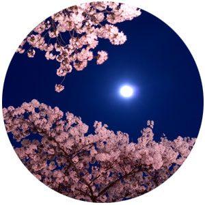 「天使の降る音楽」桜の花びらがキラキラした美しい新曲です♪